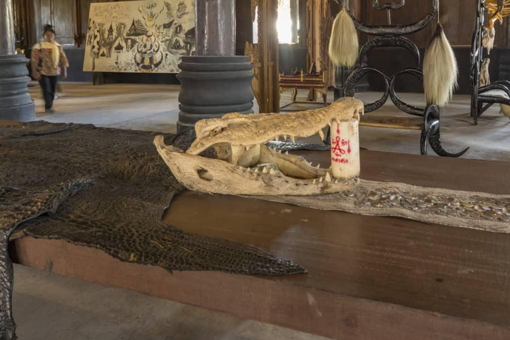Der Schädel vom Krokodil schließt direkt an zur Schlangenhaut