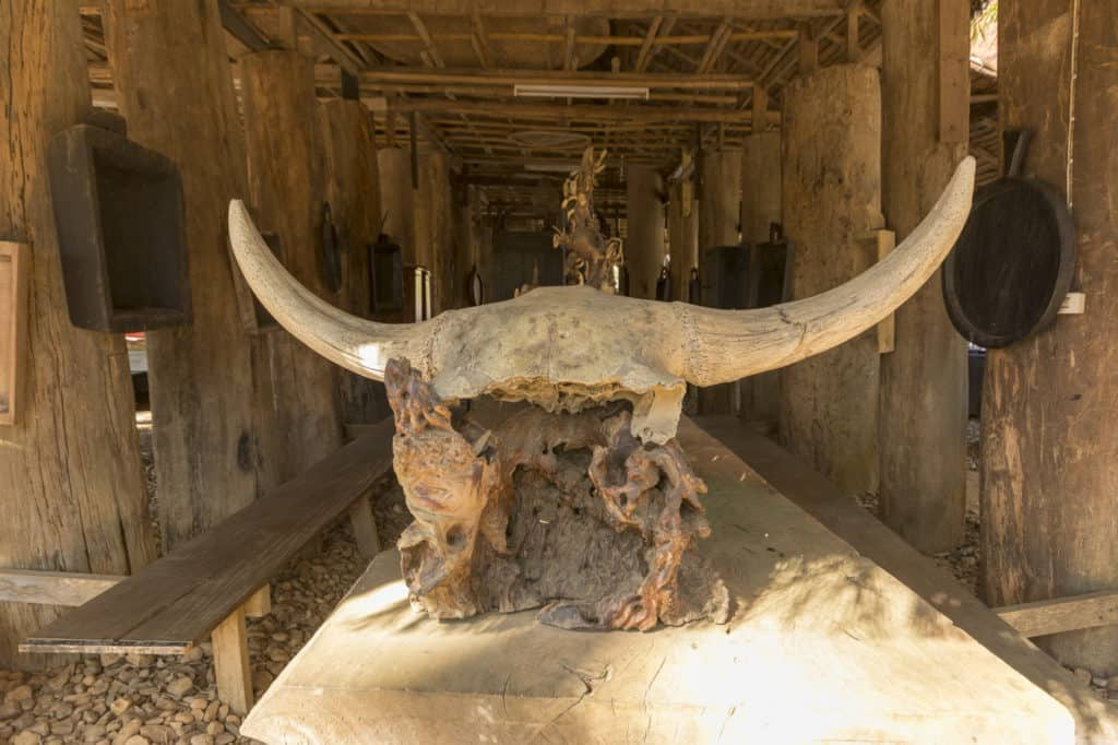Ein Stück Holz mit einem alten Büffelschädel
