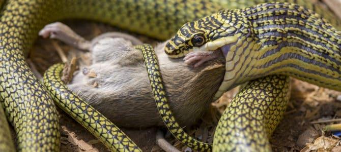 Die Maus und die Schlange – Bild der Woche 26/18