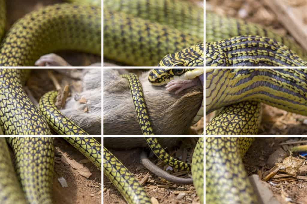 Die zwei drittel Regel in der Fotografie bei einem Bild angewendet