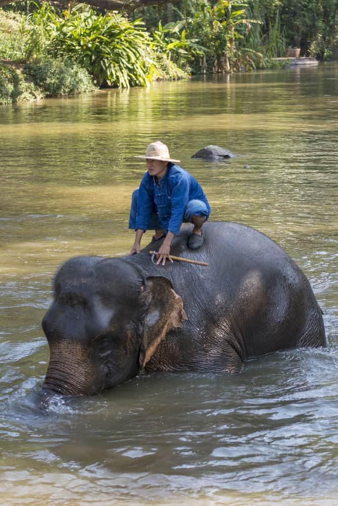 Abendliches Baden der Elefanten beim Trecking