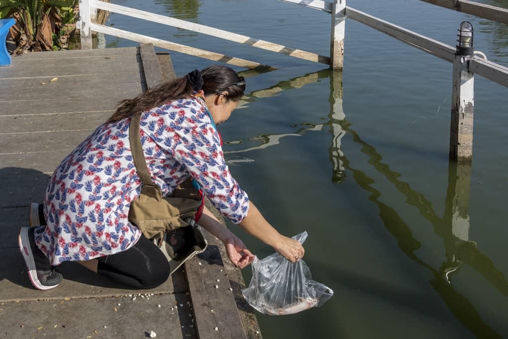 Meine Begleiterin schüttet einen Fisch in den See