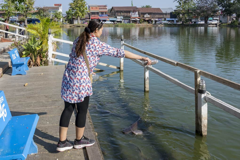 Meine Begleiterin füttert die Fische im Wat Traphang Thong