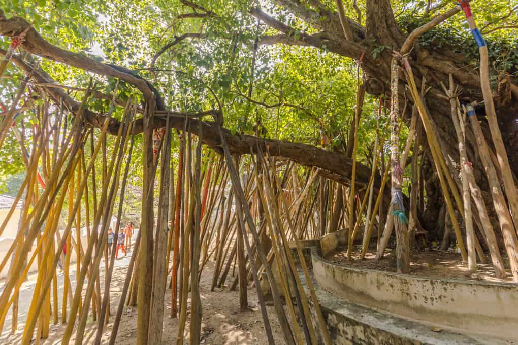 Heiliger Baum mit Tham Bun Gaben