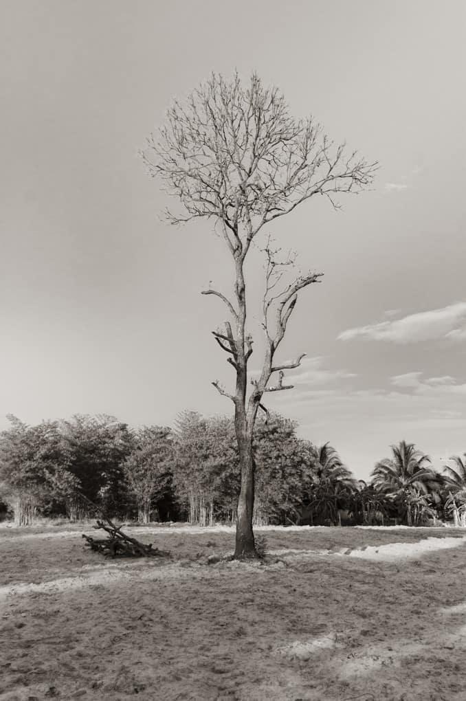 Abgestorbener Baum als Motiv bei den 10 Tipps