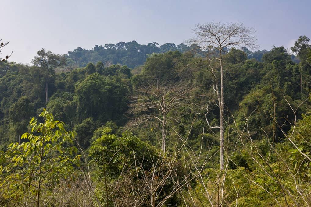 Der wunderschöne Ausblick über den tropischen Walt nahe Kbal Spean