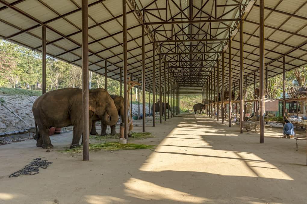 Elefantenunterstand im Elephant Conservation Center Lampang
