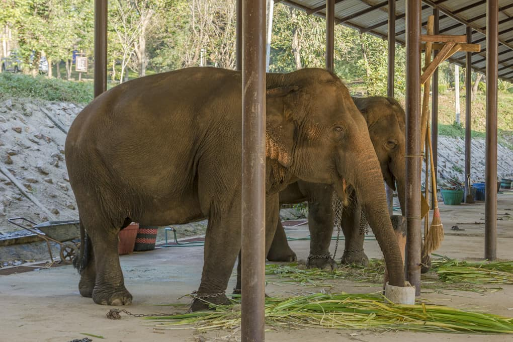 Der kleine Elefanten-Snack zum Frühstück