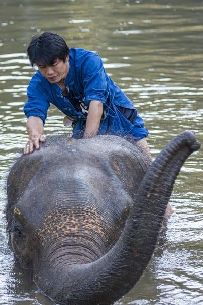 Elefanten Mahut pflegt liebevoll sein Tier im Elephant Conservation Center
