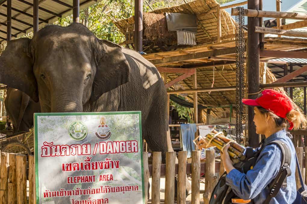 Hinweis - Gefahr vor den Elefanten