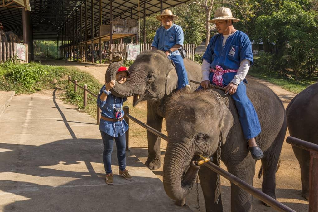 Brav bedankt sich der Elefant für das Frühstück im Elephant Conservation Center Lampang