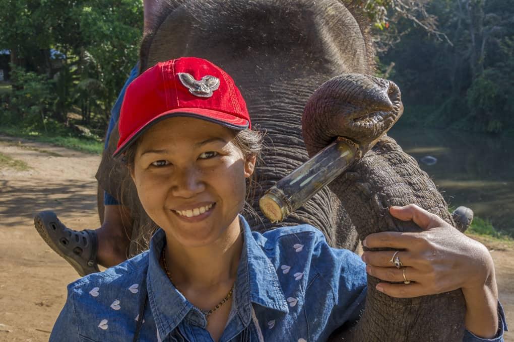 Thailänder und auch Touristen lieben das Füttern von Elefanten