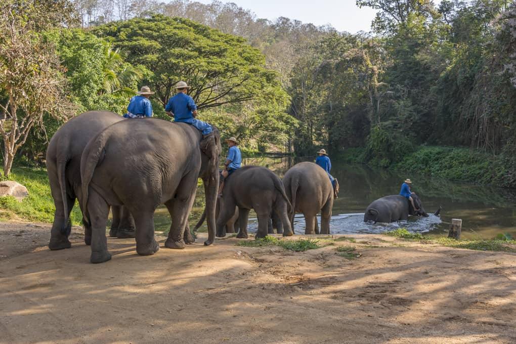 Auf zum morgendlichem Bad im Elephant Conservation Center Lampang