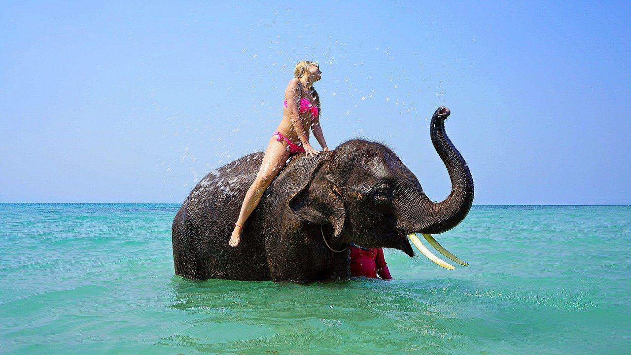 Touristin auf einem Elefanten - Thailand nur eine Ware