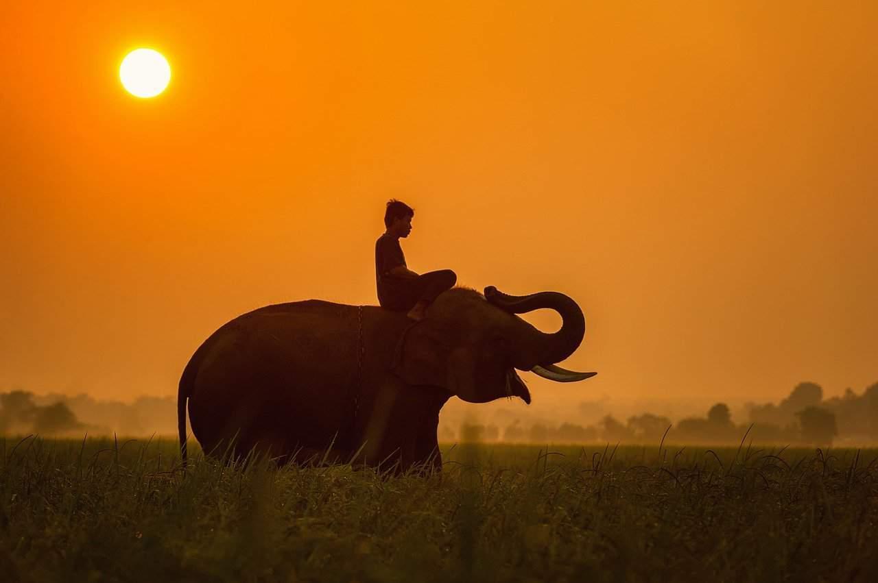Elefantenreiten – ein umstrittenes Vergnügen